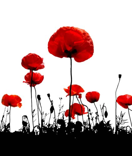 Remembrance Day observances planned - LynnValleyLife