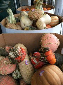 Consider giving your jack o' lantern a new look with some of the scary squash on offer at Save-on-Foods!