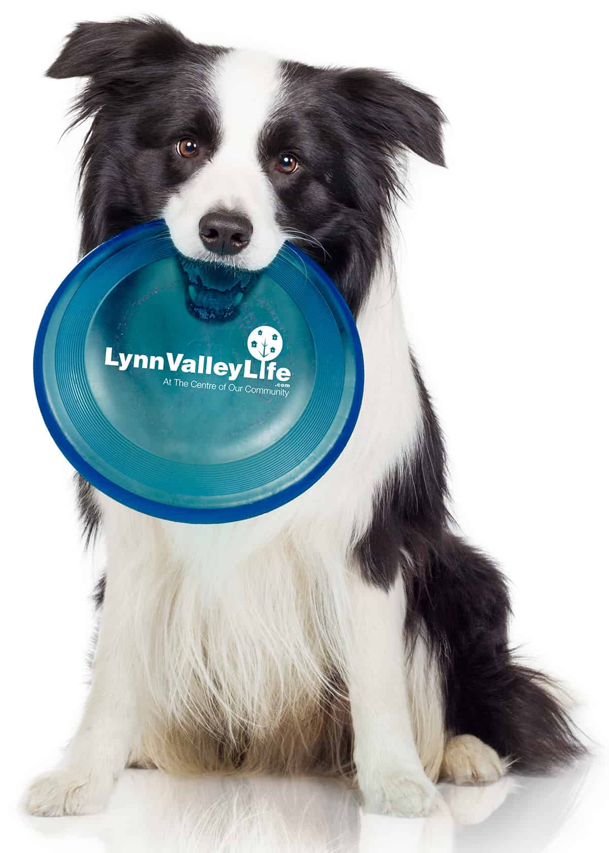 Dog with LVL frisbee