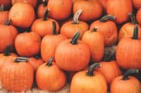 Picking pumpkins & community building