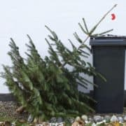 Oh Christmas Tree - You're done