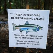Preserving local salmon habitat during the International Year of the Salmon